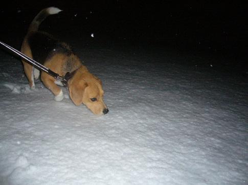 0202雪2.jpg