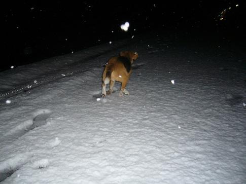 0202雪4.jpg
