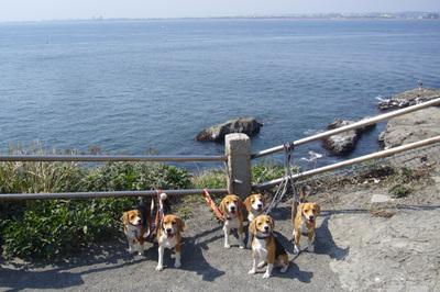 0411江ノ島16.jpg