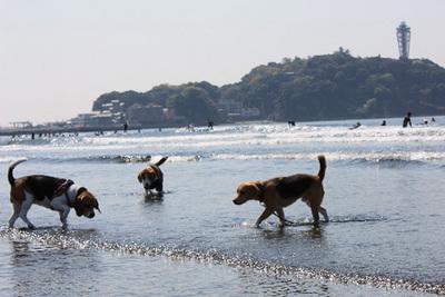 0411江ノ島6.jpg