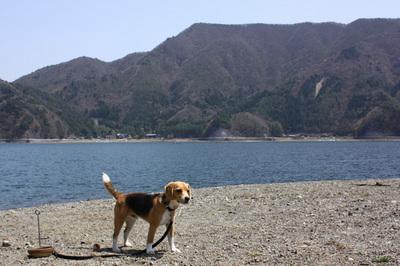 0418西湖初キャンプ1.jpg