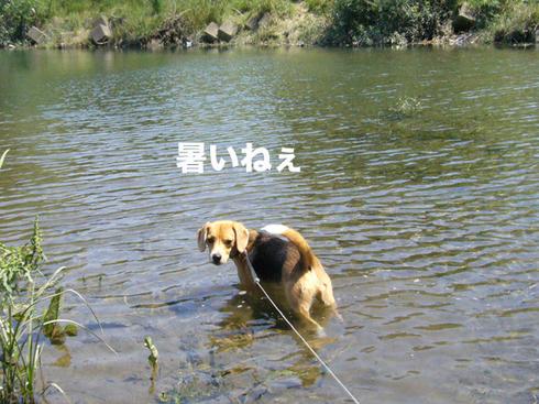 0615水遊び1.jpg