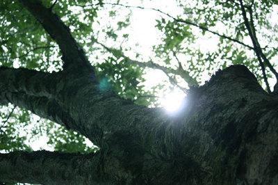 0620道志の森2.jpg
