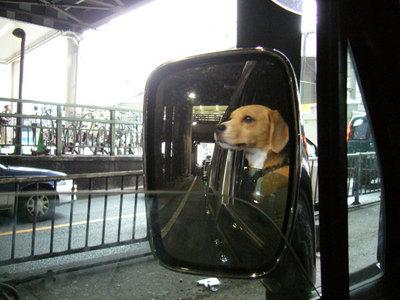 0702働く犬2.jpg