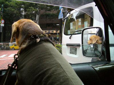 0702働く犬3.jpg