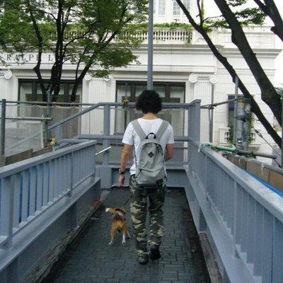 0702働く犬9.jpg