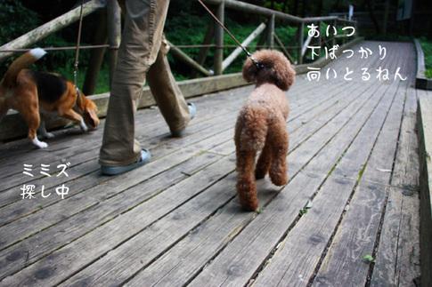 0718ハルと散歩3.jpg