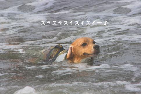 0815海水浴15.jpg