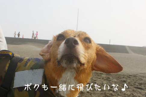 0815海水浴26.jpg