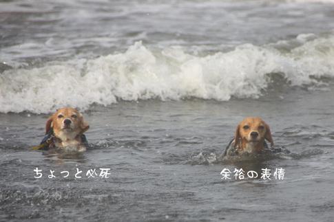 0815海水浴36.jpg