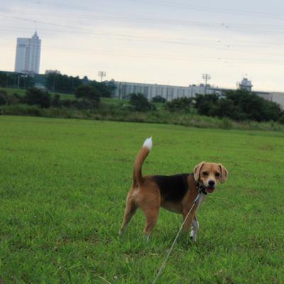 0817多摩川散歩1.jpg