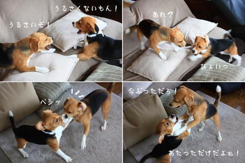 0820夢の多頭飼い10.jpg