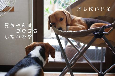 0820夢の多頭飼い12.jpg