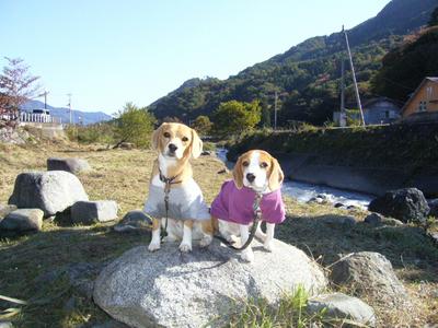 1101道志川キャンプ1.jpg