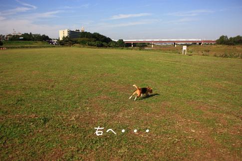 1108秋の多摩川2.jpg
