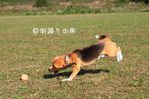 1108秋の多摩川9.jpg