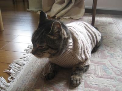 01070000 005 セーターを着たジュン.jpg