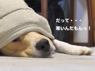 0125眠過ぎ3.jpg