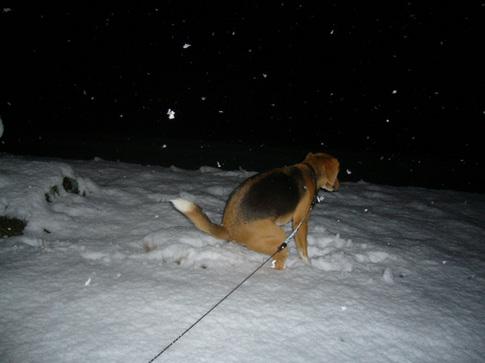 0202雪3.jpg