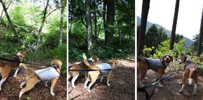 0620道志の森14.jpg