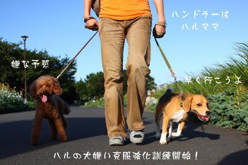 0718ハルと散歩1.jpg