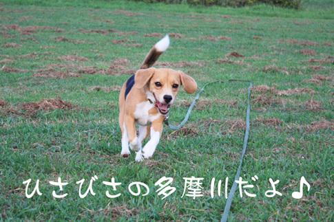 0727多摩川最高1.jpg