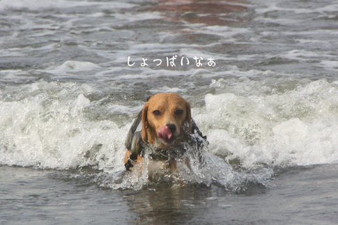0815海水浴17.jpg