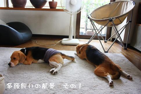 0820夢の多頭飼い6.jpg
