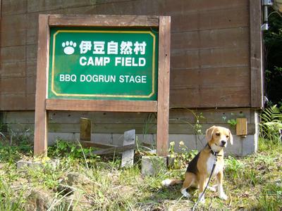 0906伊豆キャンプ1.jpg