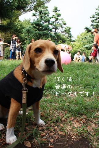 1003代々木公園26.jpg