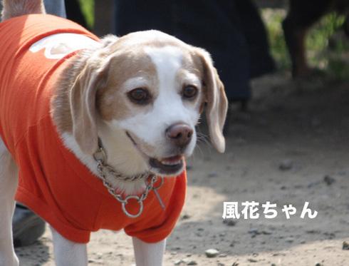 1031水元2005オフ5.jpg