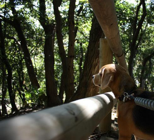 1103高根森林公園5.jpg