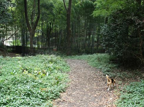 1108森林公園再び10.jpg