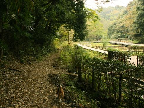 1108森林公園再び12.jpg