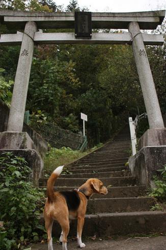 1108森林公園再び3.jpg