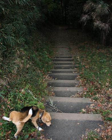 1108森林公園再び8.jpg