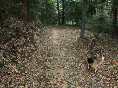 1108森林公園再び9.jpg
