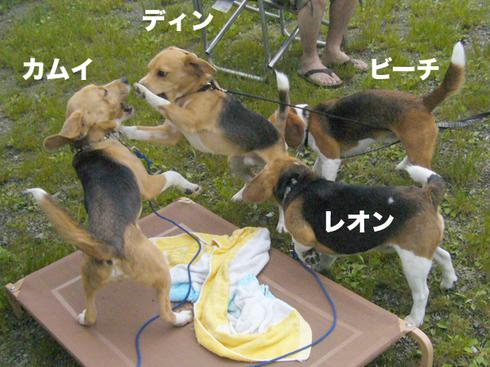お誕生日旅行_腰フラれ犬1.jpg